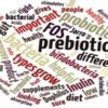 The Benefits of Prebiotics